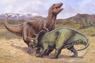 Illustration representing two dinosaurs fighting, Diceratops in foreground